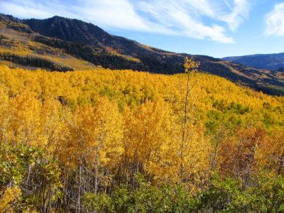 Utah seeks more influence over national forest management