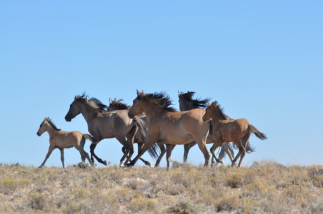 US land managers in Utah to tackle wild horse population