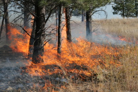 Controlled burn turns into wildfire