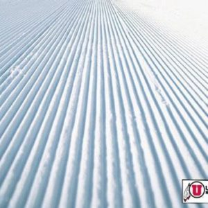 University of Utah Skiers Earn Academic All-American Honors