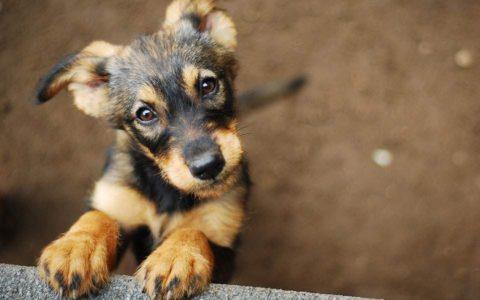 Utah pet vet housed many animals during wildfire evacuations