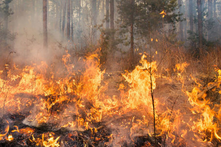 Utah forester: Firefighting costs this year at $110 million