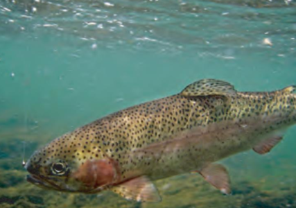 State to stock prized fishery near Page with rainbow trout