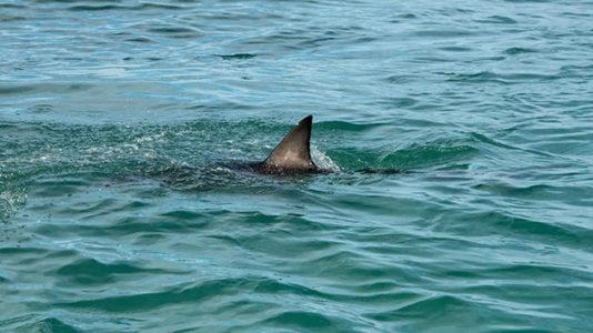 Officials confirm shark attacked boy at Long Island beach