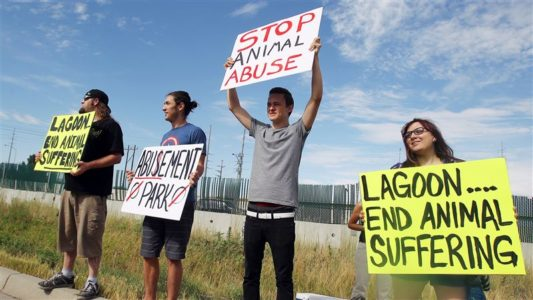 Animal rights group to protest elk's death at Lagoon park