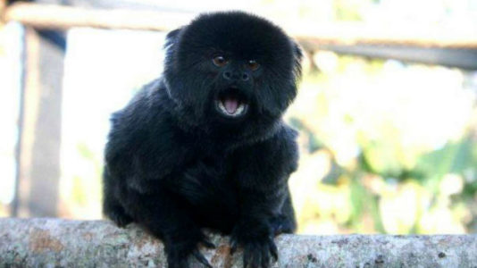 Police search for valuable monkey snatched from Palm Beach Zoo