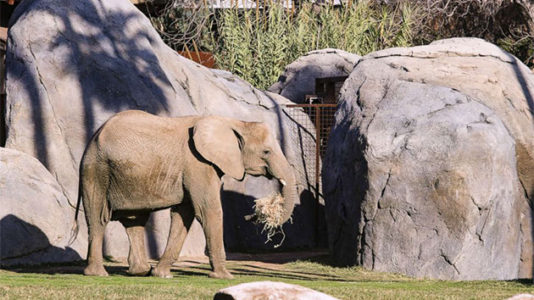 11-year-old African elephant named Bets dies unexpectedly at Fresno Chaffee Zoo in California
